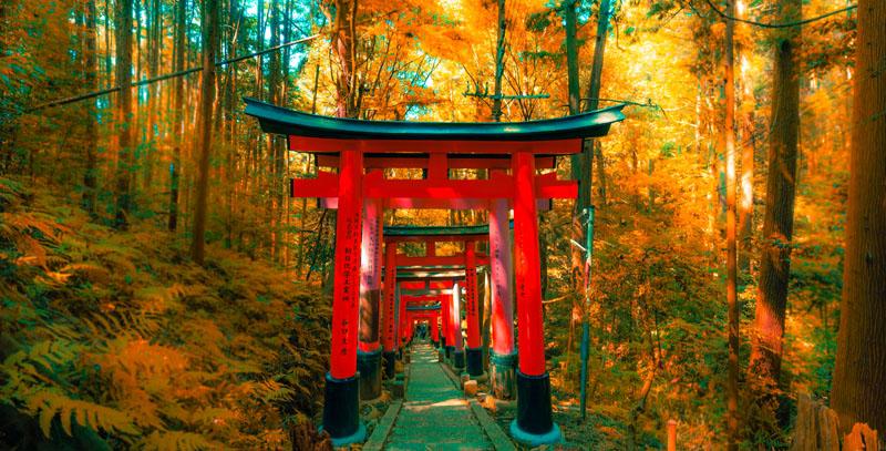 giappone natura autunno