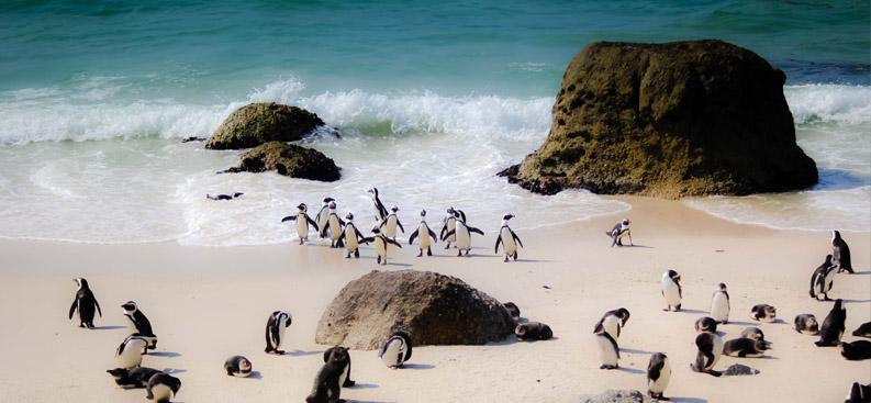 sudafrica_tour_pinguini